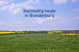 Brandenburger Landschaft mit Windkraftanlagen