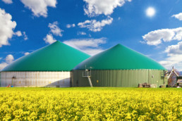 Biogasanlage: 2 runde Silos vor blauem Himmel im Rapsfeld