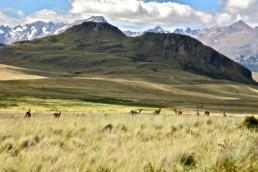 Patagonia Nationalpark - Pressebild für Pressemitteilung von Tesvolt