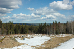 Blick auf eine mit Schnee bedeckte Wiese. Im Hintergrund ist eine skandinavische Waldlandschaft zu erkennen. Der Himmel ist hellblau, aber bewölkt